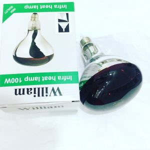Bong den hong ngoai william 100w_dailythietbidiencongnghiep.com